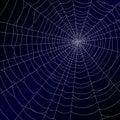 Pavúky pavučina
