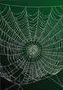 Spider's web Stock Photography