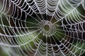 A spider's web Royalty Free Stock Photo