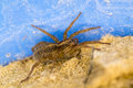 Spider in the sand resting Stock Image