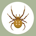 Spider silhouette arachnid fear graphic flat scary animal poisonous design nature phobia insect danger horror tarantula