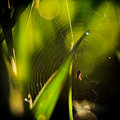 Spider sits in the center of a web Stock Photography