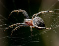 The spider sits on a web on the hunt