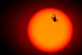 image photo : Spider walking on a sun