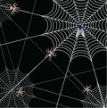 Spider and a web Stock Photography
