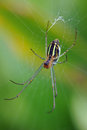 Spider on web Royalty Free Stock Photography