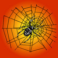 Spider in the web Royalty Free Stock Photos
