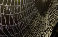 Spider web Royaltyfria Bilder