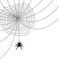 Spider Web/AI file Royalty Free Stock Photo