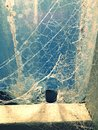 Spider web a with blue background Royalty Free Stock Photography