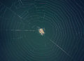 Spider web the with at centre Royalty Free Stock Images