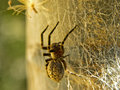 Spider in web a close up view of a small its Royalty Free Stock Images
