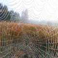 The spider web closeup background