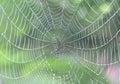 Spider web the cobweb closeup Stock Image