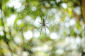 The spider web (cobweb) closeup Stock Photography