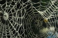 Spider web with dew Royalty Free Stock Photo