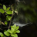 Spider web dew attached on Royalty Free Stock Image