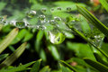 Spider web with dew drops Stock Images