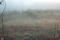 Spider web in fog Royalty Free Stock Photography