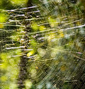Spider web in the forest a spiderweb s or cobweb from the archaic word coppe meaning is a device Stock Photos