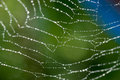 Spider web in garden close up photograph of Royalty Free Stock Photo