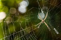 Spider on web glisten with dew Stock Images