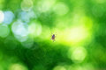 Spider web on a green background Royalty Free Stock Photos