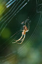Spider on the web. Royalty Free Stock Photo