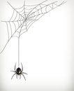 Spider web illustration on white background Stock Image