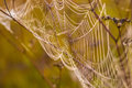 Spider web on a meadow at sunrise photo taken in october Stock Photo
