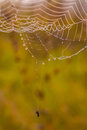 Spider web on a meadow at sunrise photo taken in october Stock Photos