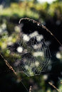 Spider web morning Stock Image
