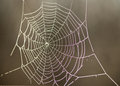 Spider web in morning dew Royalty Free Stock Photo