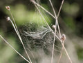 Spider web in nature on green background Royalty Free Stock Photos