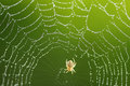 Spider web a spiderweb s or cobweb from the obsolete word coppe meaning is a device created by a out of Royalty Free Stock Images