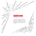 Spider web vector illustration on white background Royalty Free Stock Photo