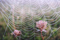 Spider web with water drops Royalty Free Stock Photo