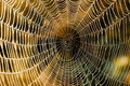 Spider web wet on an early morning at the torronsuo swamp in finland sunlight hits the water drops on the Stock Photo