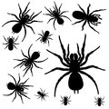 Spiders illustration of the on a white background Royalty Free Stock Photo