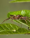 Spiders portrait Royalty Free Stock Photo