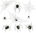 Spiders and spider web Royalty Free Stock Photo
