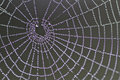 Spiders web in morning dew Royalty Free Stock Photography