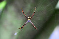 Spiders in web morning dew Stock Images