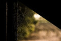 Spiders web shined by sunrise Royalty Free Stock Images