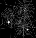 Spiders and webs Royalty Free Stock Images