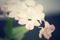 Spiders with white orchid flower Stock Photos