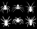 Spiders white silhouettes of on black background Stock Photo