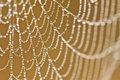 Spiderweb Royalty Free Stock Photo