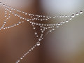 Spiderweb in autumn with waterdrops Stock Photos