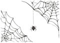 Spiderweb. Big black spider web. Black scary spider of web. Poison spider Royalty Free Stock Photo